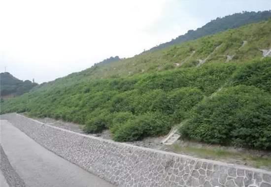 高速公路边坡绿化的施工流程